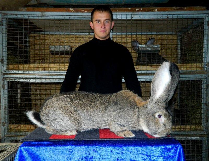 Забой кроликов в домашних условиях, как и что нужно 31