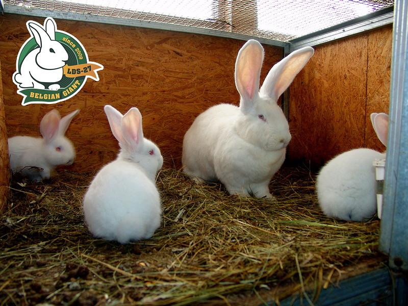 все о породах кроликов с фото